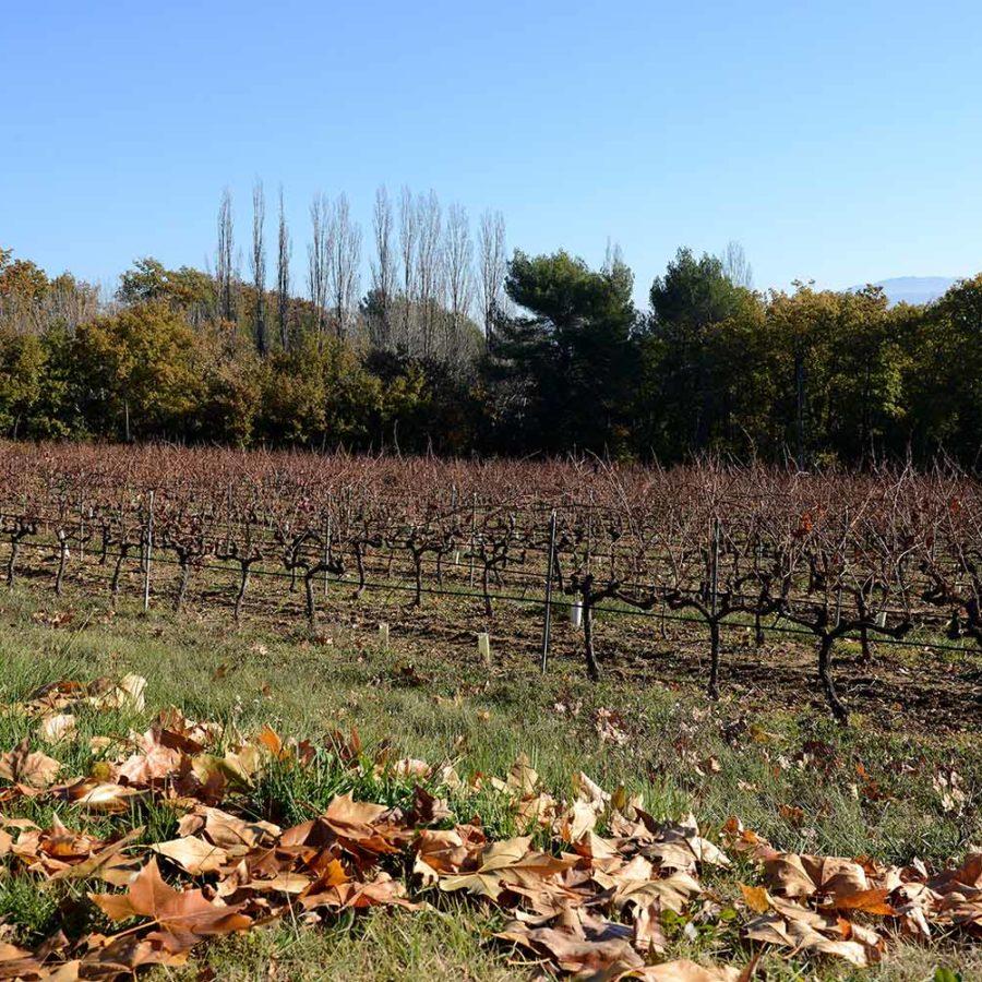 Les vignes du Domaine de la Verrière vin de Provence Luberon AOP Ventoux
