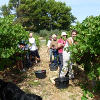 Vendanges au Domaine de la Verrière vin de Provence Luberon AOP Ventoux
